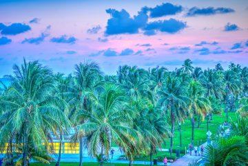 paysage de floride avec des palmiers