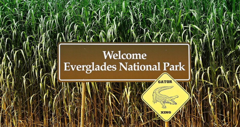 les everglades parc en Floride