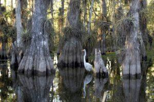 faune des everglades en Floride